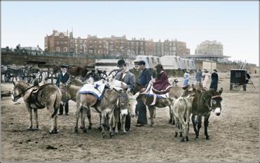 Donkeys on the Sands 1906, 54759t