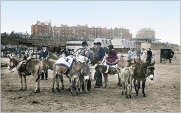 Donkeys on the Sands 1906, 54759t