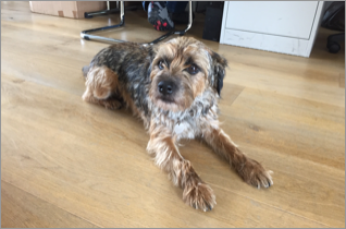 Meet Bengo! The Frith office team's furry friend.
